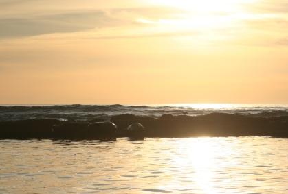 harbor-seals.jpg