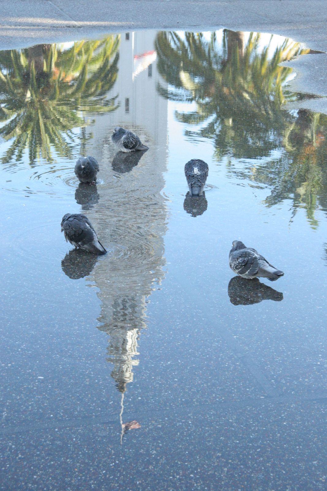 puddle.jpg